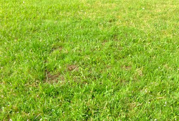 16_Polterauer_11.04_da kommt das neue Gras