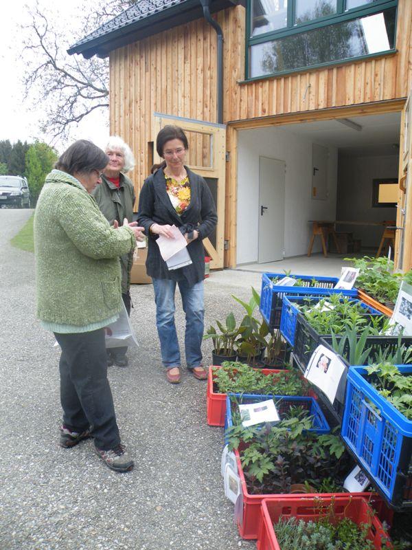 Erste Pflanzenberatungen bei Gabi und Mathilde